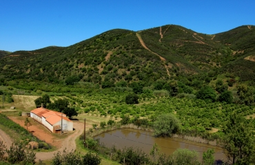 Organic fruit farm for sale in green valley near Monchique